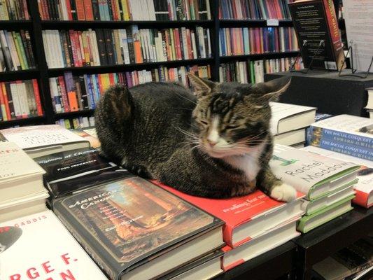 Cat in bookstore