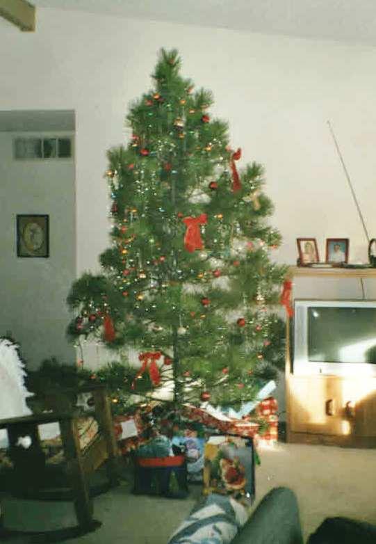 christmas tree Colo. Spgs.